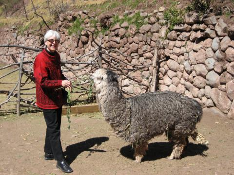 Jane and an alpaca in front of a stone wall