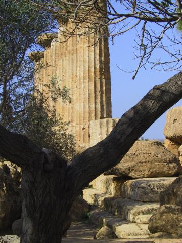 Looking through tree branches at an ancient Greek column